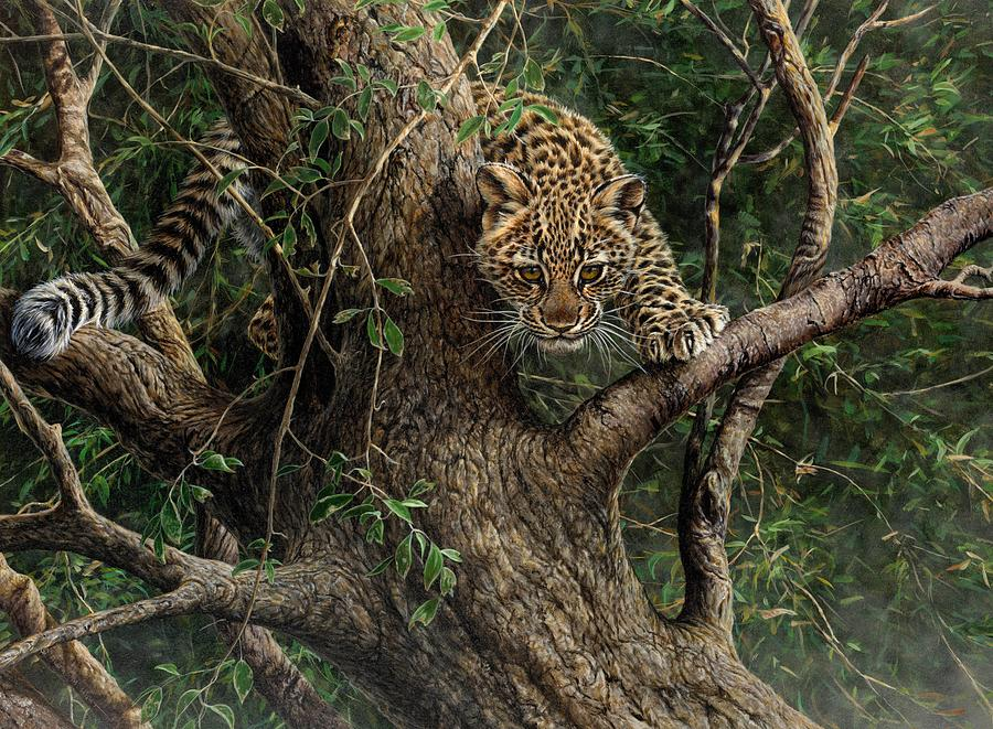 Amur Leopard Cub Climbing a Tree by Alan M Hunt