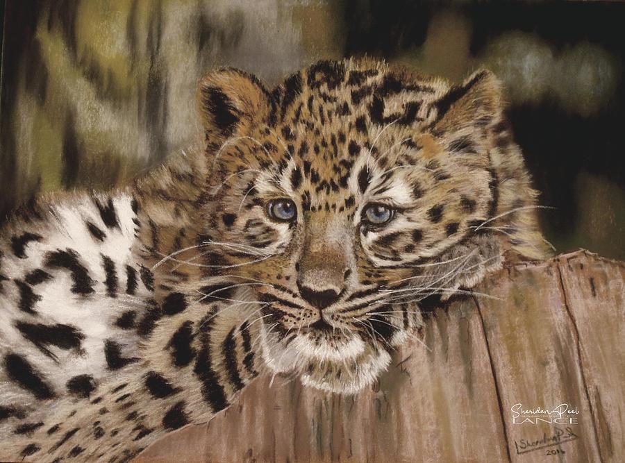 Amur Leopard Cub by Lance Sheridan-Peel