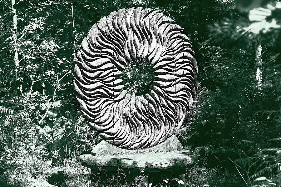 Sculpture Photograph - An Abstract Wooden Sculpture by Graham Cornall