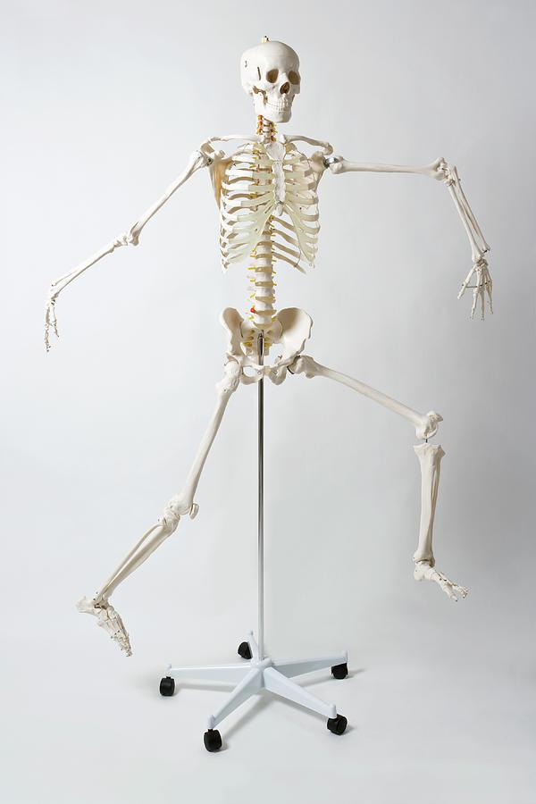 An Anatomical Skeleton Model Running Photograph by Rachel De Joode