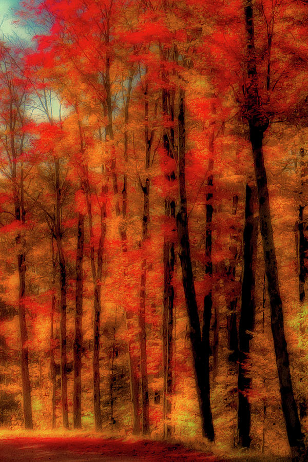 An Autumn Abstract by David Patterson
