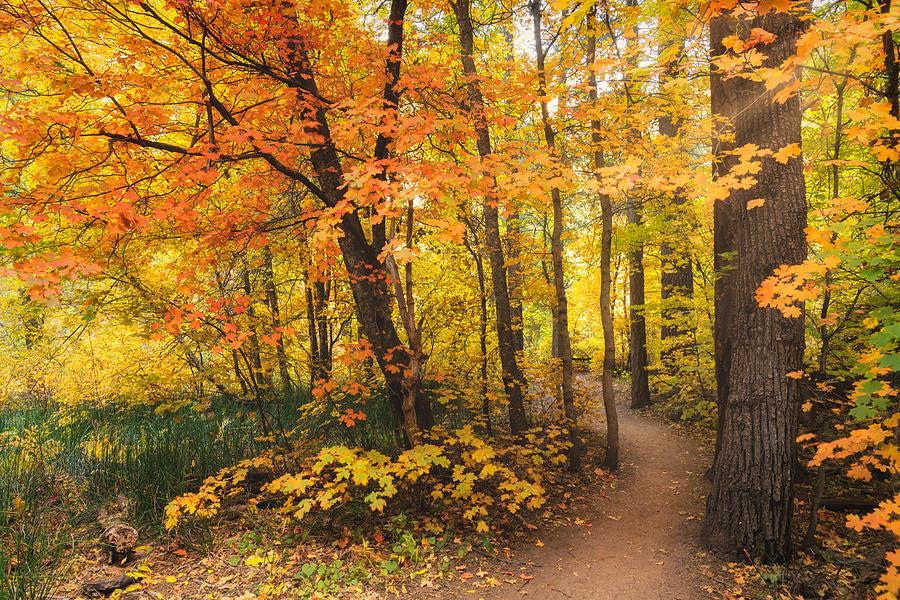 An Autumn Walk Amonst The Maples by Saija Lehtonen