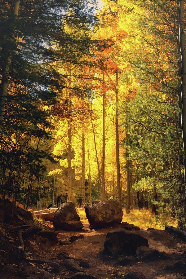 An Autumn Walk  by Saija Lehtonen