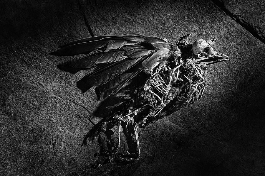 an endless dream of flight  by Mark Fuller