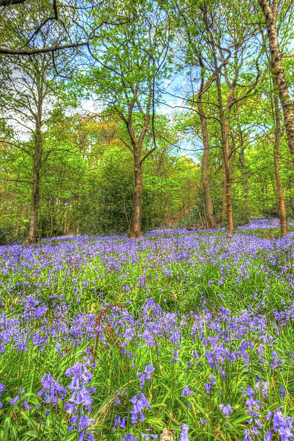 Wild Garlic Photograph - An English Bluebell Wood by W Chris Fooshee