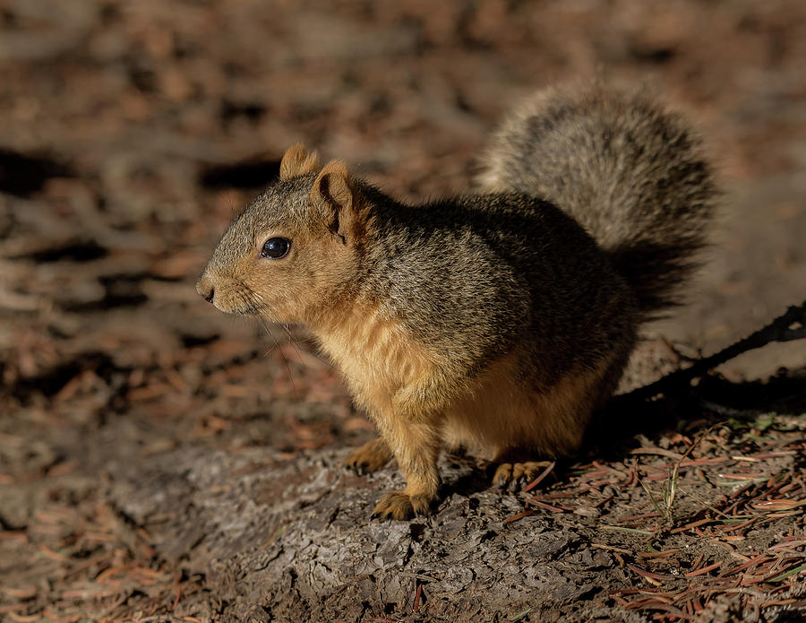 An Idaho Squirrel by Yeates Photography