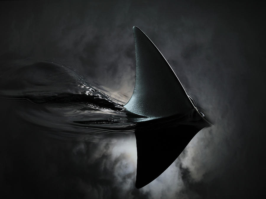 An Image Of A Shark Fin Against Moon By Jonathan Knowles