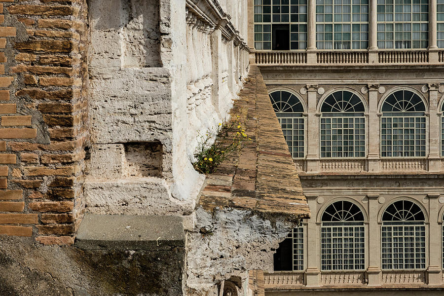Apostolic Palace Photograph - An Inconvenient Weed by Joseph Yarbrough