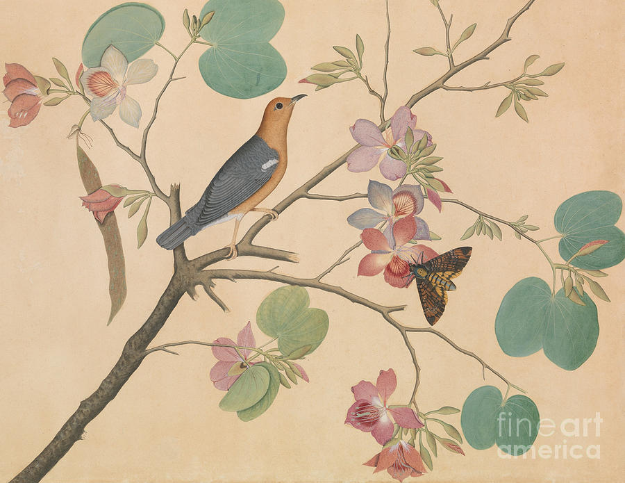 Orchid Painting - An Orange Headed Ground Thrush And A Moth On A Purple Ebony Orchid Branch, 1778 by Shaikh Zain ud-Din