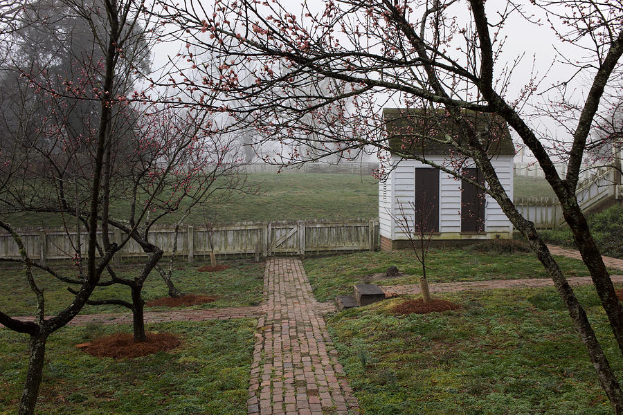An Orchard on a Misty Morning by Rachel Morrison