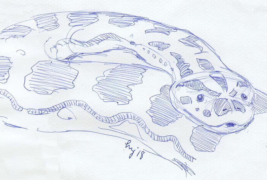 Anaconda drawing by Mike Jory