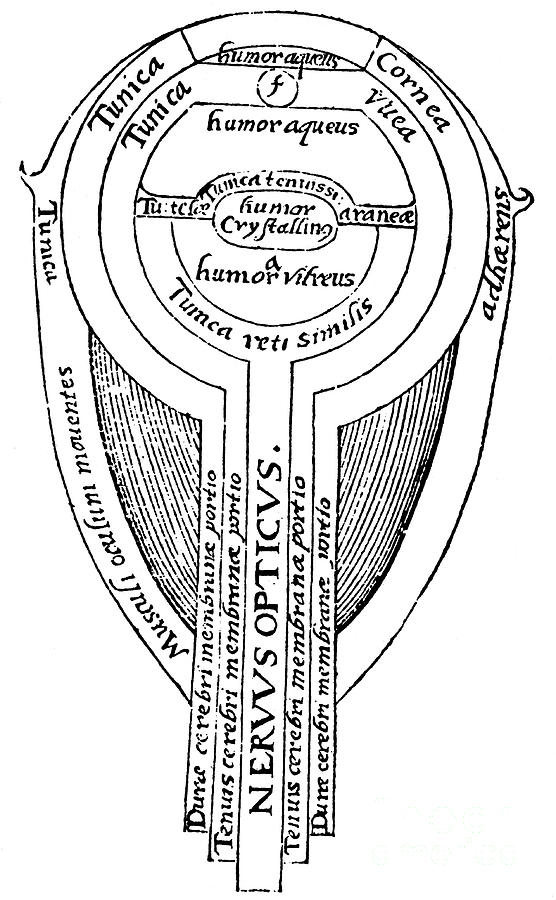 Anatomy Of The Eye, 1572 Drawing by Print Collector
