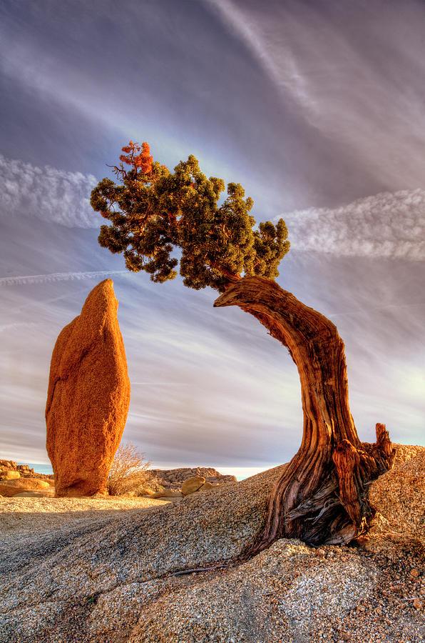 Ancient Cedar Tree Over Balanced Rock Photograph by Bill Wight