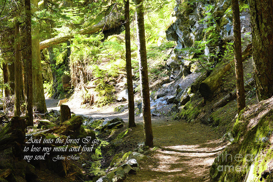John Muir Photograph - And Into The Woods by Kathy Kelly