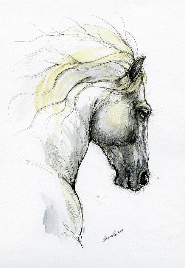 Andalusian horse 2019 09 04 by Angel Ciesniarska