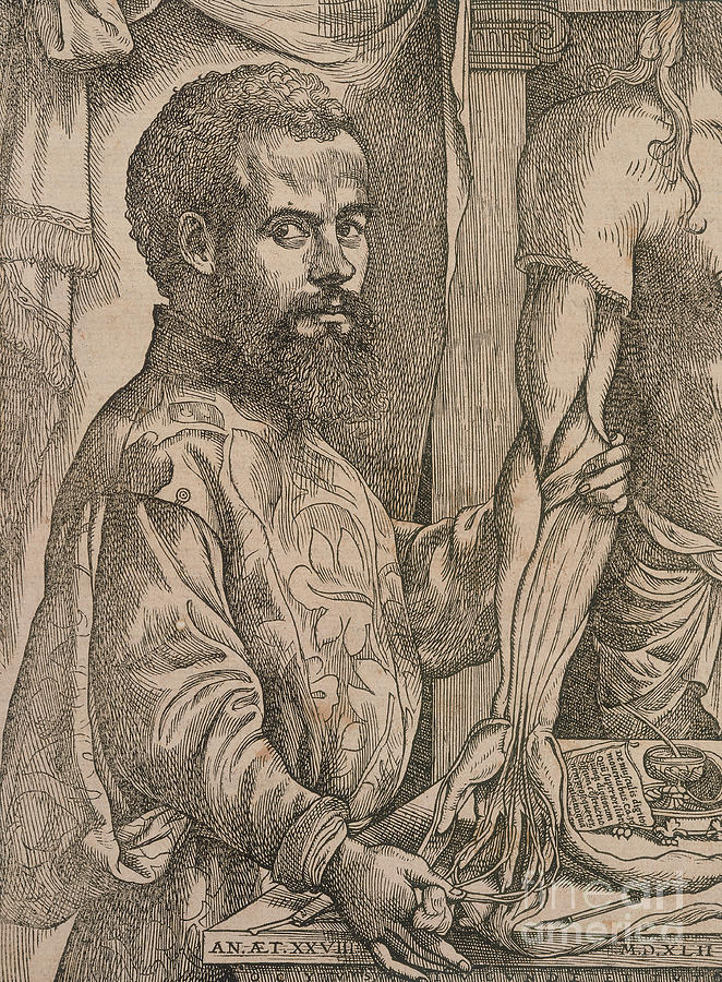 Andreas Vesalius Dissecting The Muscles Drawing by Print Collector