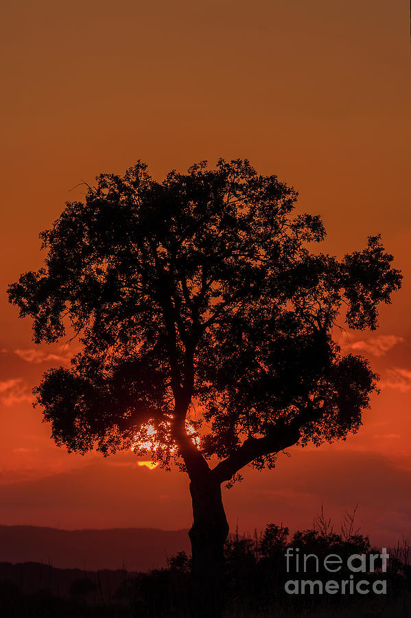 Andujar sunset by Hernan Bua