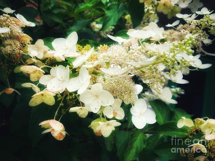 Angel Flowers by Kathy M Krause