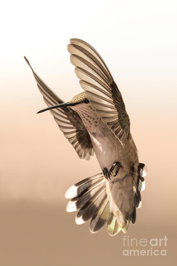 Angelic Hummingbird by Lisa Manifold