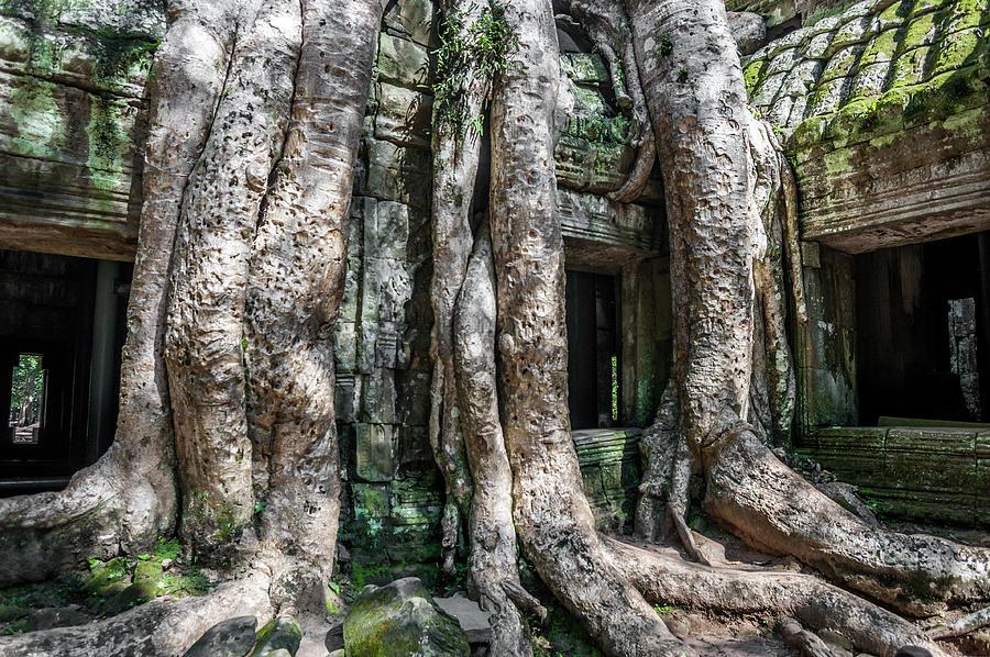 Angkor Roots by Ian Robert Knight