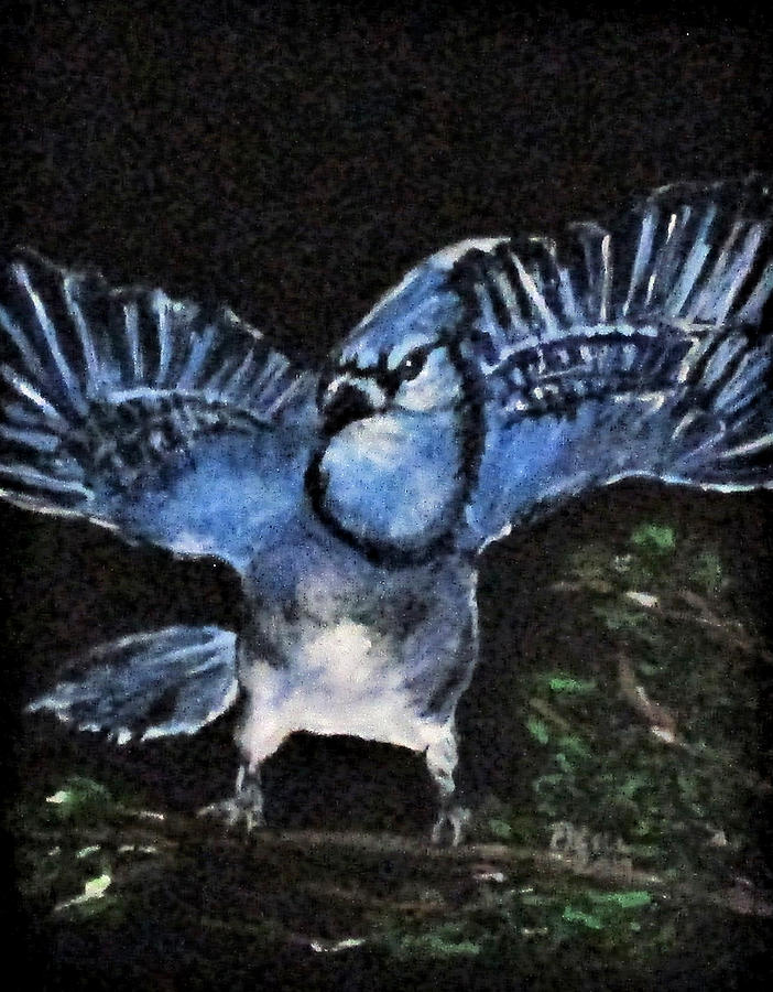 Angry Blue Jay by Clyde J Kell