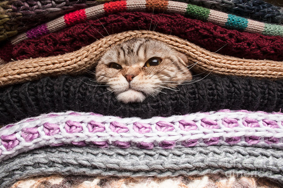Pets Photograph - Angry Cat Is Preparing For Winter by Koldunov Alexey