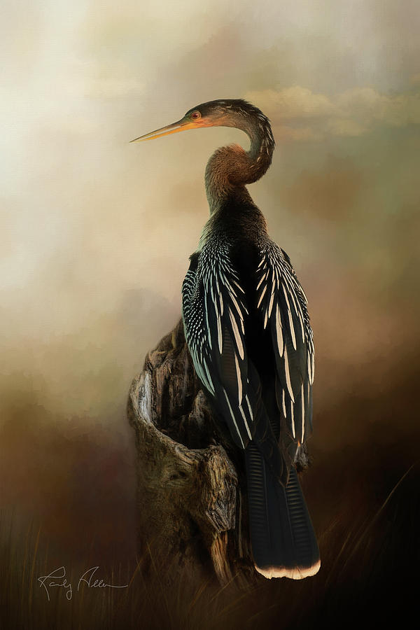 Anhinga by Randall Allen