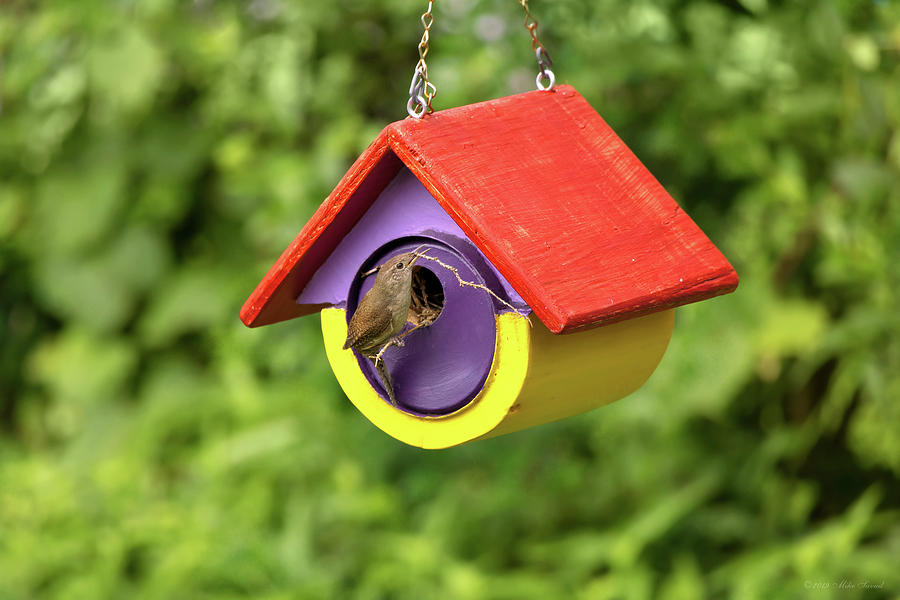Animal - Bird - The house wren by Mike Savad