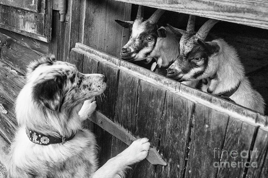 Animal farm by Fabian Roessler