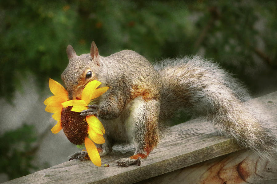 Animal - Squirrel - Summer treats by Mike Savad