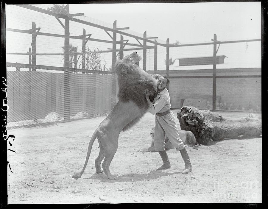 Animal Trainer Wrestling A Lion Photograph by Bettmann