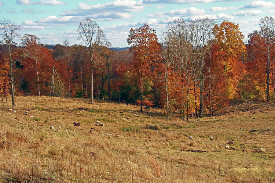 Animals Grazing on a Fall Day by Angela Murdock