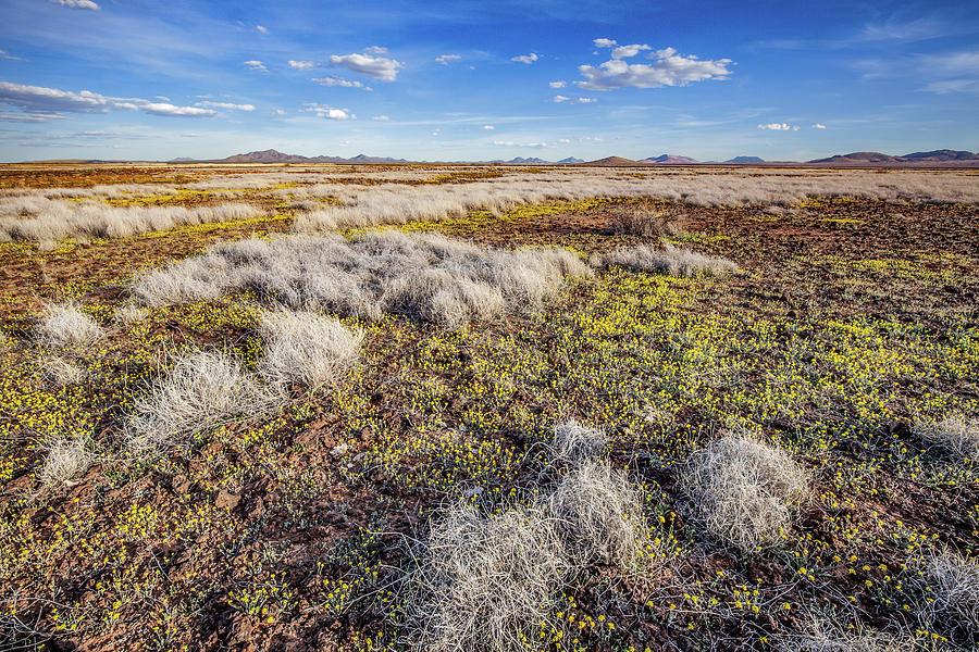 Animas High Desert in Bloom by Lon Dittrick
