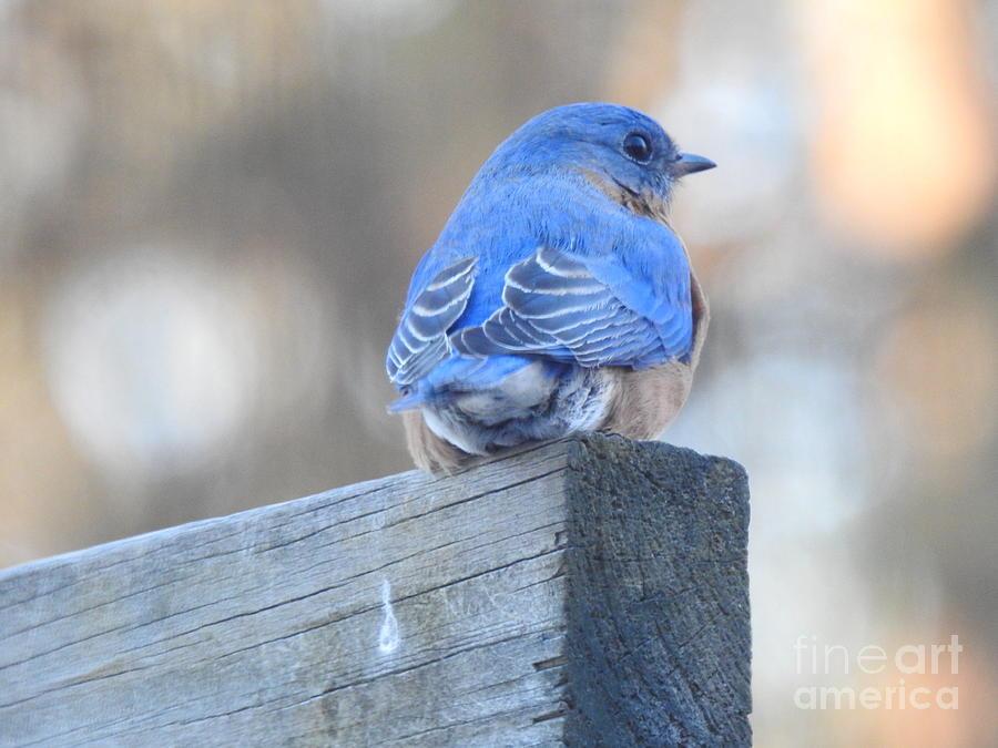 Another Bluebird Visits by Eunice Miller