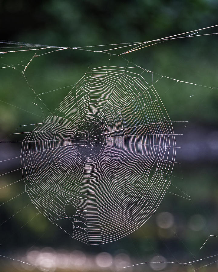 Another Web by Paul Ross