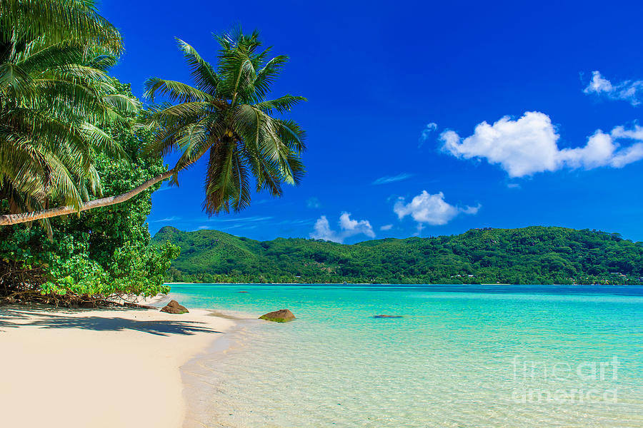 Palm Photograph - Anse A La Mouche - Paradise Beach In by Simon Dannhauer