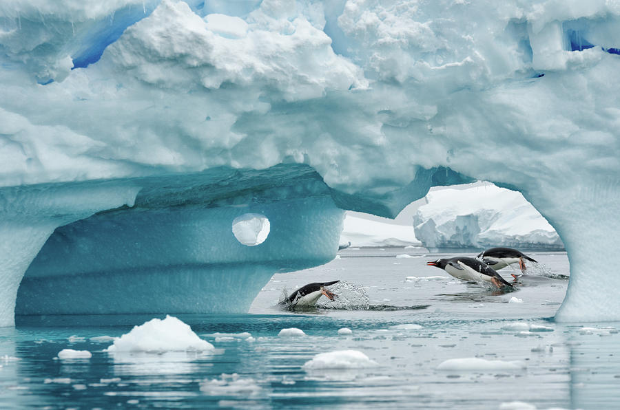 Antarctica Photograph by Kyle W. Anstey