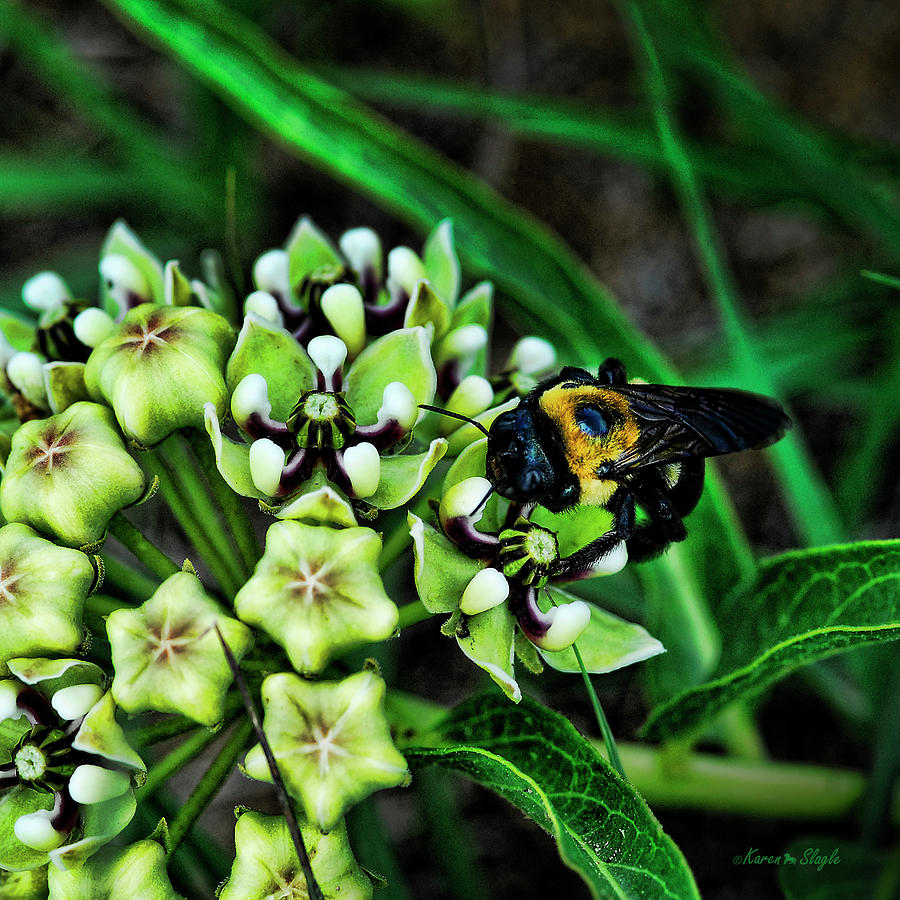 Antelope Horns and Bumblebee by Karen Slagle