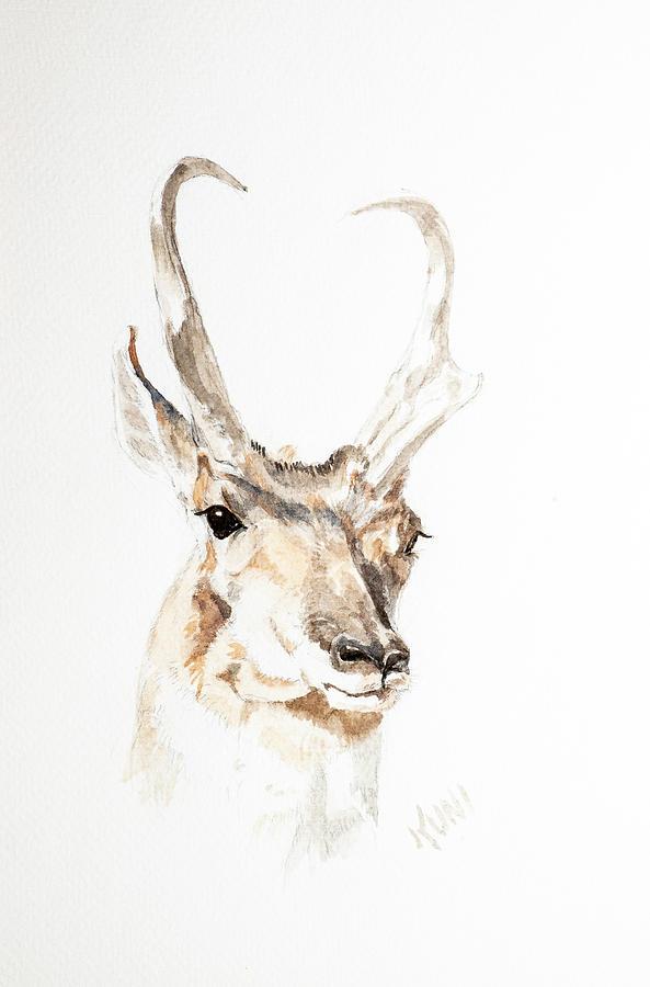 Antelope by Karen Rispin