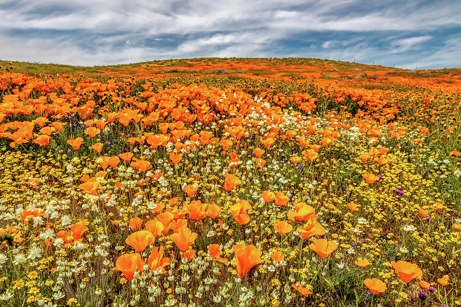 Antelope Valley Photograph - Antelope Valley Spring by Peter Tellone