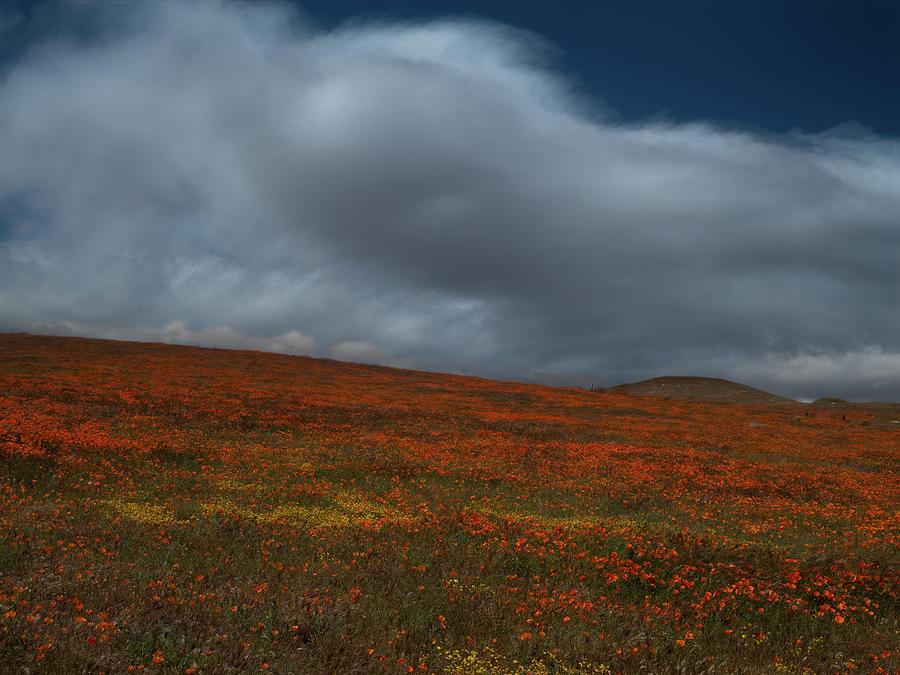 Antelope Valley01 by Alan Kepler