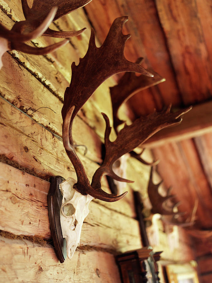 Antler Collection On Wall Photograph by Granefelt, Lena