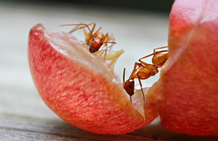 Ants Photograph - Ants by Candice Trimble