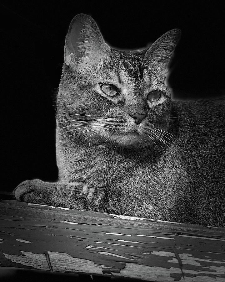 Anya Cat Bw Photograph