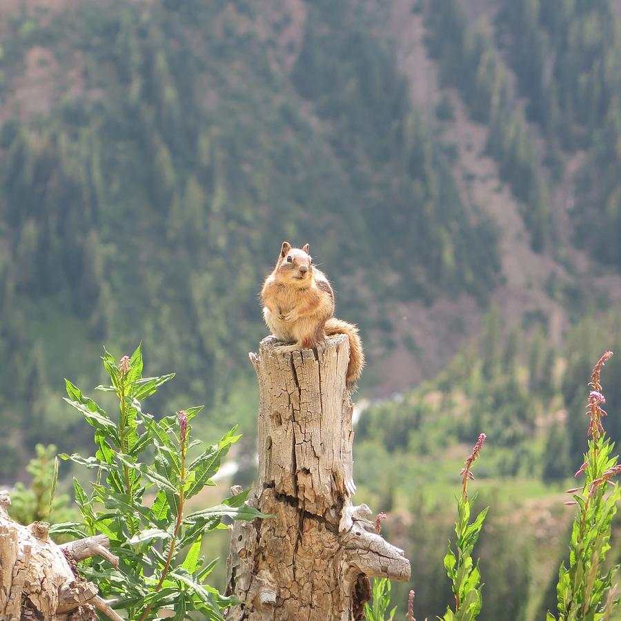 Wildlife Photograph - Anybody Got a Peanut by Lori J Welch