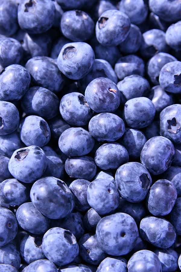Anyone For Blueberries Photograph by Pastorscott