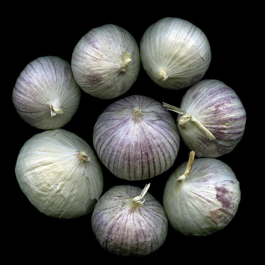 Anyone For Garlic Photograph by Photograph By Magda Indigo