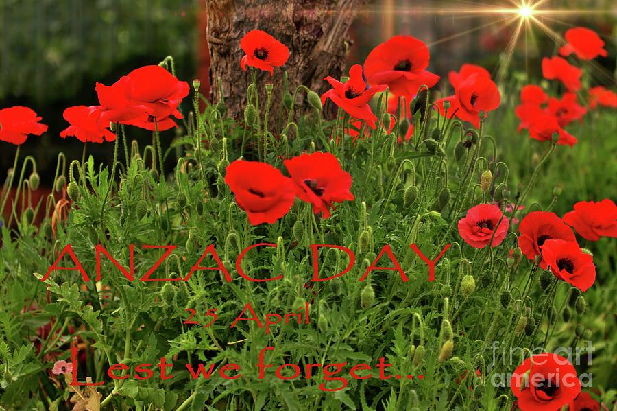 ANZAC DAY - Lest We Forget - Poppies by Carolyn Parker