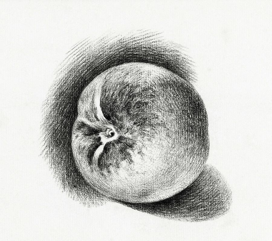 Healthy Painting - Apple  1812  By Jean Bernard  1775-1883  by Jean Bernard