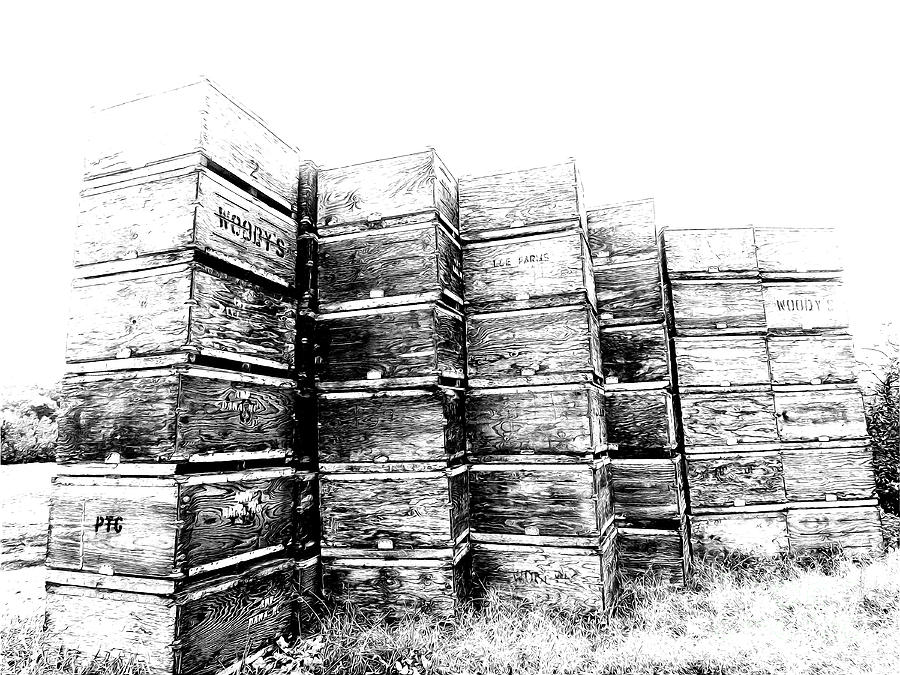 Apple Crates Sketch 300 Drawing